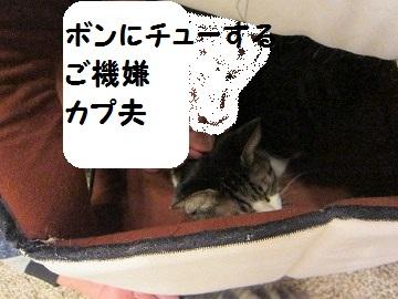 IMG_1106 2011 (38
