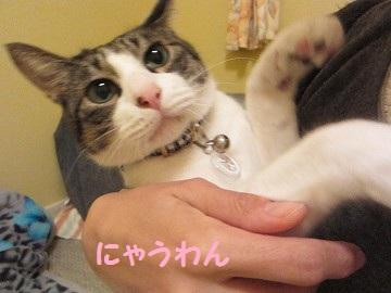 IMG_0411 2011 (14