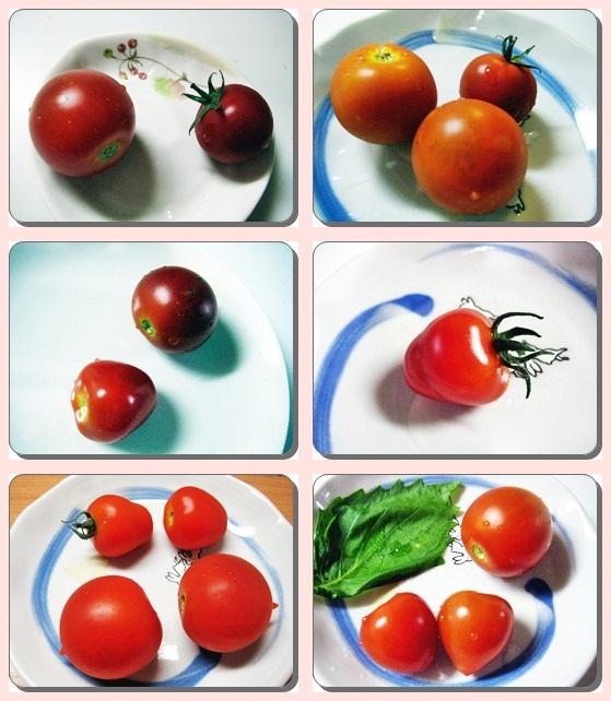 IMG_6408野菜-tile