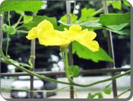 IMG_6413野菜