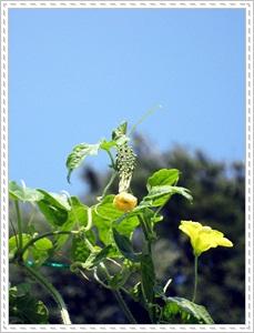 IMG_7678野菜