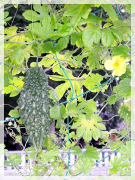 IMGP0339野菜