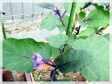 IMG_8302野菜