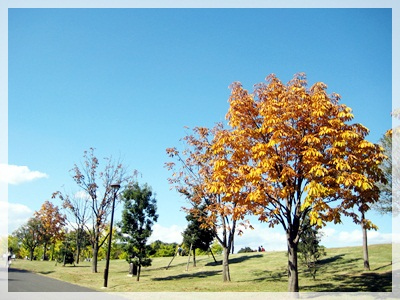 IMG_9028昭和記念公園