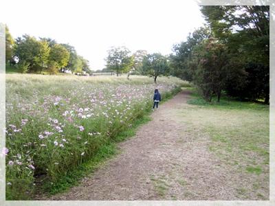IMG_9123昭和記念公園