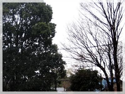 IMG_0233初雪