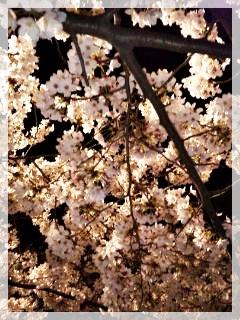 110409_190938夜桜