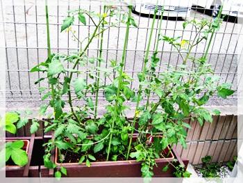 IMG_1104野菜の観察