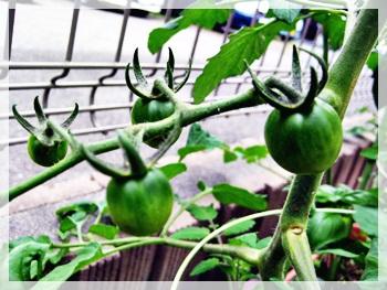 IMG_1105野菜の観察