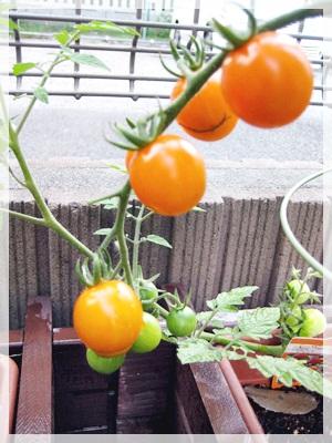 IMG_1403枝豆