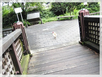IMG_1804散歩