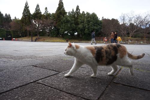 mikeko20121224.jpg