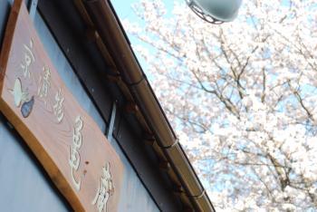 DSC_6125sakura.jpg