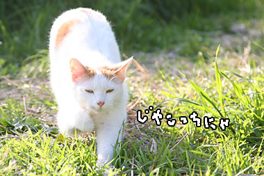 IMG_4662_20100507221327.jpg