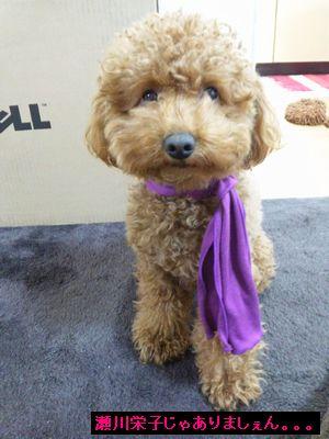 紫のスカーフ