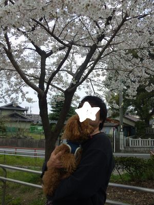桜の下でおとうしゃんと2