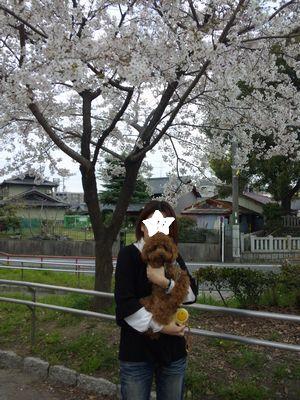 桜の下でおかあしゃんと