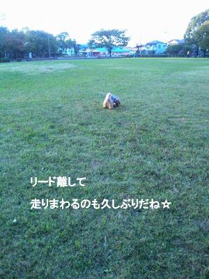 散歩11.4