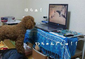 DVC00013.jpg