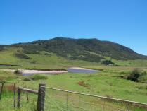 Fern river horseriding (1)