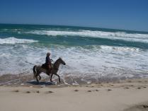 Fern river horseriding (10)