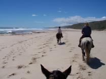 Fern river horseriding (9)