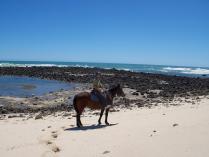 Fern river horseriding (8)