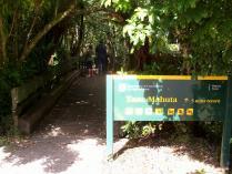Dec 21st, 2011 NZ一番デカい木 (1)