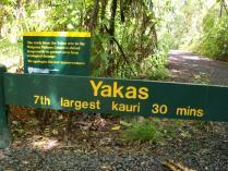 Dec 21st, 2011 NZ一番デカい木 (12)
