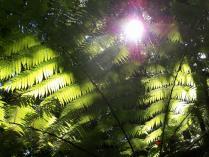 Dec 21st, 2011 NZ一番デカい木 (18)