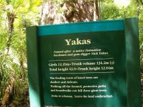 Dec 21st, 2011 NZ一番デカい木 (25)