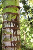 Dec 21st, 2011 NZ一番デカい木 (40)