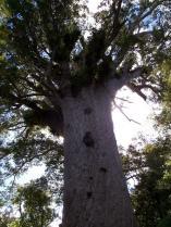 Dec 21st, 2011 NZ一番デカい木 (5)