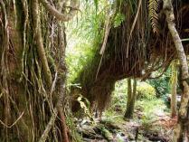 Dec 21st, 2011 NZ一番デカい木 (6)