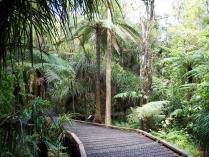 Dec 21st, 2011 NZ一番デカい木 (7)