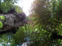 Dec 21st, 2011 NZ一番デカい木 (19)