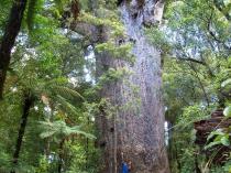 Dec 21st, 2011 NZ一番デカい木 (29)