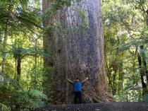 Dec 21st, 2011 NZ一番デカい木 (26)