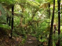 Dec 21st, 2011 NZ一番デカい木 (21)