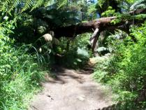 Dec 24th, 2011 Cycling in Rotorua (1)
