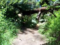 Dec 24th, 2011 Cycling in Rotorua (1)