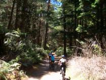 Dec 24th, 2011 Cycling in Rotorua (3)