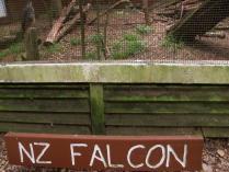 kiwi house (7)
