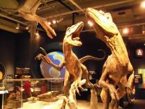 Wellington museum (4)