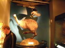 Wellington museum (8)