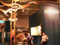 Wellington museum (18)