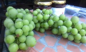 間引き葡萄