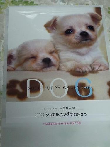 ショナルカレンダー犬