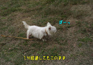 image211119a.jpg