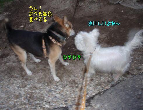 image211125b.jpg